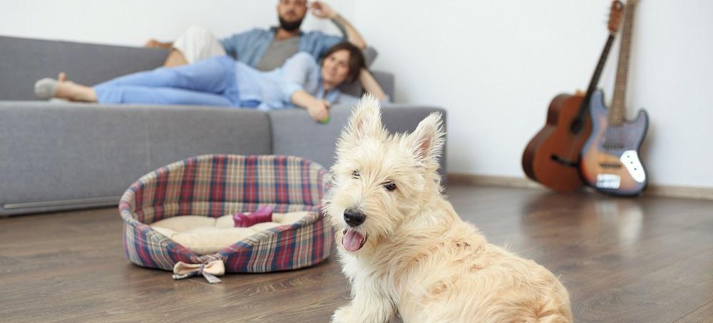 https://lvflooring.ca/wp-content/uploads/2020/08/9-Important-Hardwood-Flooring-Tips-for-Pet-Owners-2.jpeg