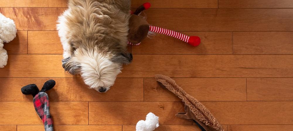 https://lvflooring.ca/wp-content/uploads/2020/09/How-To-Choose-Hardwood-Floors-if-You-Have-Pets-1.jpeg